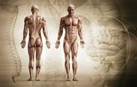Weitreichende Folgen von Muskelverspannungen