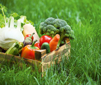Vegetarische Kost heilte Entzündungen