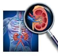 Dem Nierenversagen frühzeitig entgegenwirken
