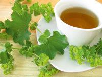 Teetasse und Frauenmantel