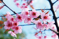 Frühling: Zeit zum Abnehmen und Entgiften