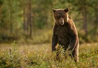 Der Bär in uns: was uns mit ihm verbindet