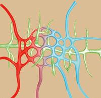 Lymph- und Blutbahnen