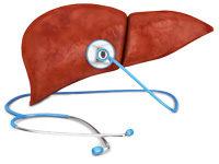 Leber und Stethoskop