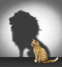Katze mit Löwenschatten