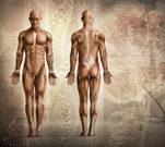 Wie fit sind  Ihre Muskeln?