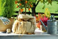 Pflanzen und Arbeitsutensilien