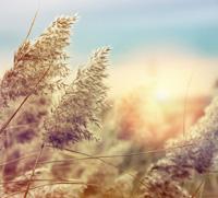 Allergie – auf den Körper hören statt Symptome zu unterdrücken