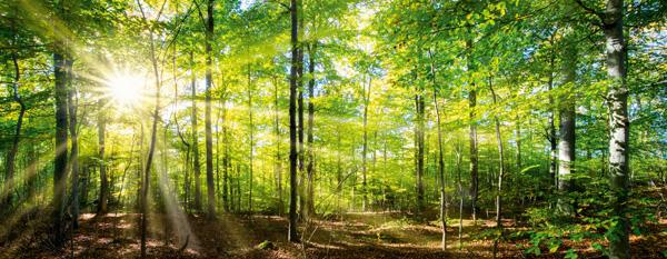 Medizin aus dem Frühlingswald