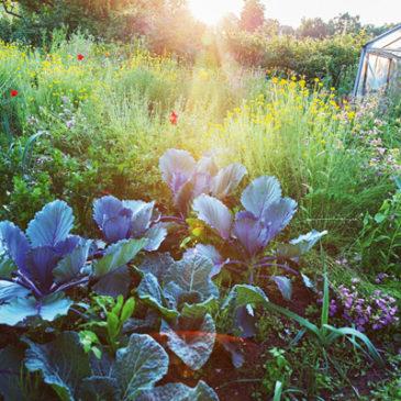 Sanfter Pflanzenschutz mit Jauchen und Brühen