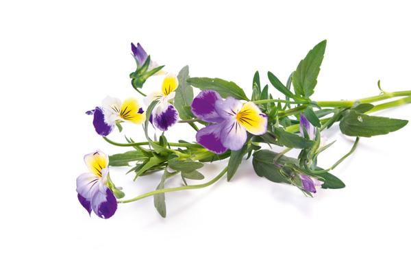 Die besten Heilpflanzen bei Hautproblemen aller Art