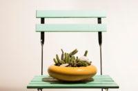 Kaktusschale auf Gartenstuhl
