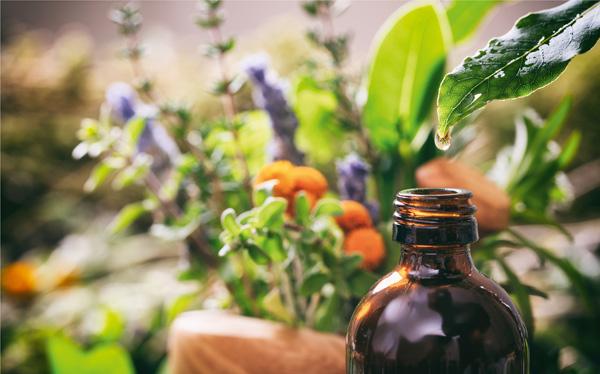 Mit Pflanzenkraft gegen Schmerz und Entzündung