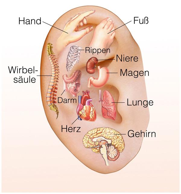 Ohrakupunktur bei Stuhlinkontinenz durch Morphium