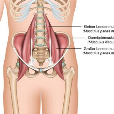 Hüftbeuger: schmerzfrei dank Osteopathie