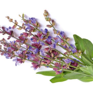 Die besten Heilpflanzen gegen Erkältungen