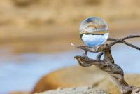 Glaskugel auf Todholz