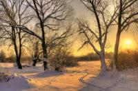 Bäume und Büsche im Winter