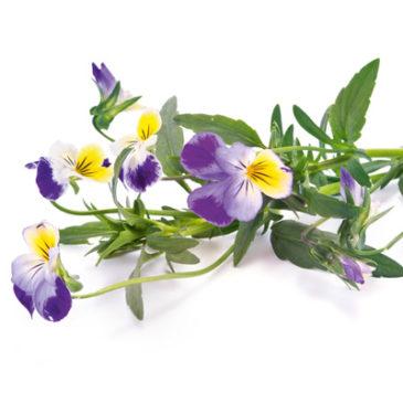 Die besten Heilpflanzen für Ausleitung und Frühjahrskur