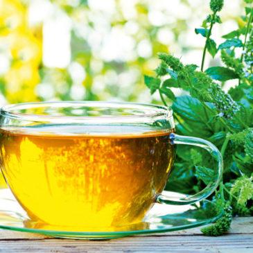 Wirksame Heilpflanzen für Magen und Darm