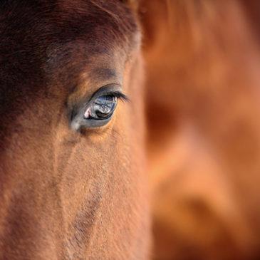 Wie Pferde unsere Seele spiegeln
