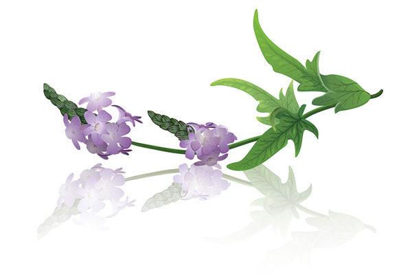 Die besten Heilpflanzen für Herz und Kreislauf