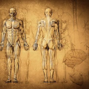 Bewegungsapparat – kennen Sie sich aus?