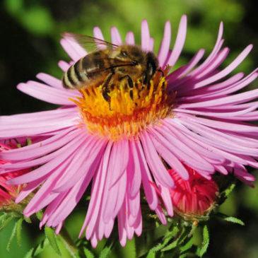 Ein Garten für Bienen, Hummeln und Co.