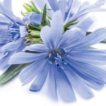 Die besten Heilpflanzen für die Leber