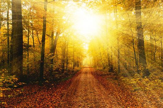 Weg durch Herbstwald