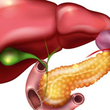 Stoffwechselmotor Bauchspeicheldrüse