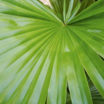 Die besten Heilpflanzen für Harnwege und Prostata