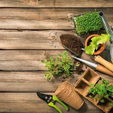 Auch im Garten Ressourcen sparen
