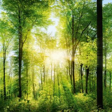 Wie wir der Natur wieder näherkommen