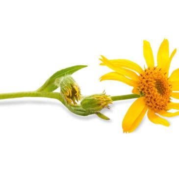 Die besten Heilpflanzen für Senioren