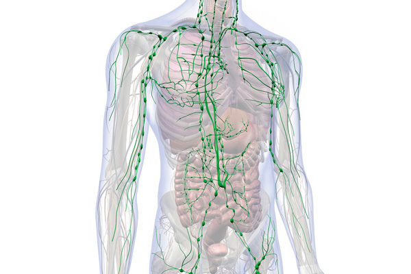 Natürliche Pflege für Ihr Lymphsystem