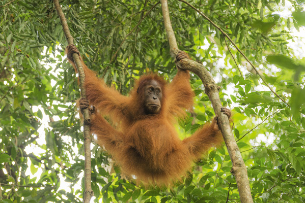Palmöl: Leid für Mensch, Tier und Natur