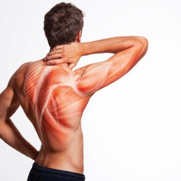 Warum Muskeln nicht ohne Nerven können …