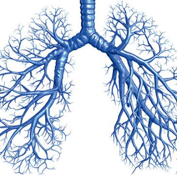 Atemwege: in der Tiefe der Lunge
